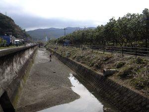鹿児島県大島支庁の担当者には「旧斜面ですので、全部は無理かも」と伝えてありましたが、日も傾くころには、スッキリ、サッパリ。嬉しい眺めです。