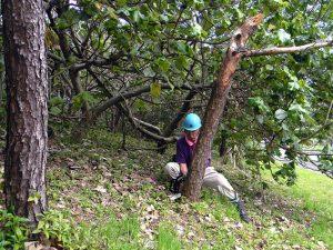 資材係の上田隊員は、訓練に先だち、3日がかりでトラックが進入できるよう通路にかかる枝を剪定。当日はマツクイムシにより枯れた松の伐採も担当。